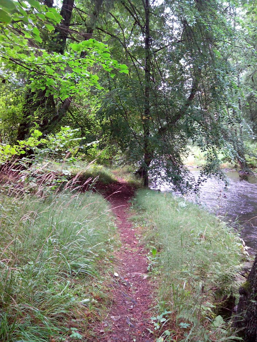 Cesta podél Kosího potoka.