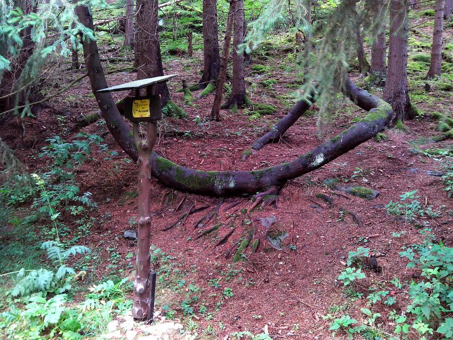 V lese jsme potkali anakondu ...